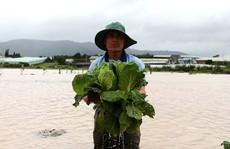Giá rau củ quả Đà Lạt vẫn cao kỷ lục