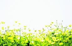 Những mùa Xuân trong trẻo