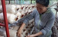 Cô kỹ sư công nghệ thông tin mê trồng nấm
