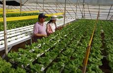 Thu nhập 'khủng' nhờ trồng rau