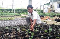 'Ẵm' vài tỉ đồng mỗi năm nhờ trồng nho giống