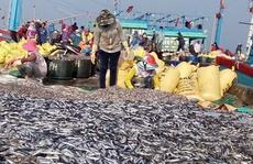 Được mùa cá nục, ngư dân không vui