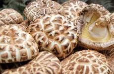 Nấm hương Nhật 8,6 triệu đồng/kg vẫn nhiều người mua