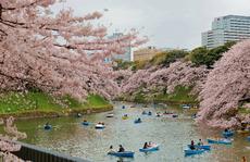 Saigontourist tặng 5 triệu đồng cho khách nữ mua tour đến Nhật