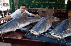 """Ba con cá lăng nặng 280 kg """"bay"""" từ Campuchia về Đà Nẵng"""