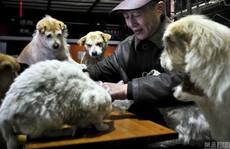 Cảm động cặp vợ chồng cưu mang 60 chú chó mèo