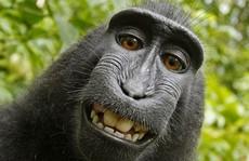 Khỉ hoang dã thành 'ngôi sao mạng xã hội' nhờ nụ cười dễ thương