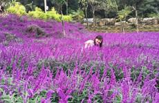 Ngẩn ngơ với thung lũng hoa ở cao nguyên Lào Cai