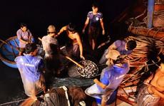 Bí kíp dụ cá có '1 không 2' của 1 ngư dân Quảng Ngãi