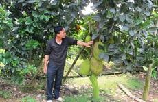 Sơn 'khùng' làm trang trại thu tiền tỉ