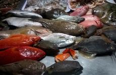 Sướng mắt đi chợ hải sản đêm Lý Sơn