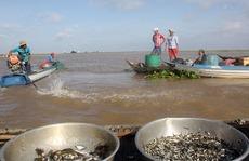 Chợ cá rặt đồng mùa nước nổi ở miền Tây