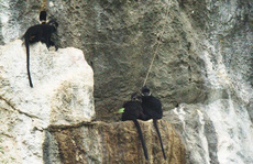 Lên núi Thiết Sơn xem ông Tú chăn voọc