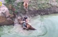 Du khách 'sốc' cảnh cọp xé xác lừa trong sở thú Trung Quốc