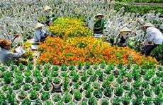 Làng hoa lớn nhất Nam bộ Sa Đéc tất bật vào mùa Tết