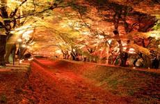 Những đường cây mùa thu đẹp nhất thế giới
