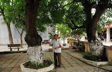 Bí mật về 4 'cụ cây' 700 tuổi ở Đồng Tâm