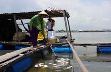 Lại hoang mang vì cá chết