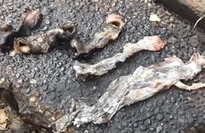 Vạch mặt 'bí quyết' hô biến thịt lợn thành đặc sản thú rừng
