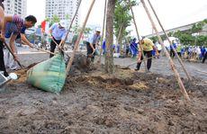 Trồng thêm cây xanh khu vực cầu Sài Gòn