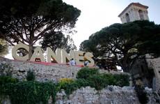 LHP Cannes: Chống khủng bố bằng 400 chậu hoa 'khủng'