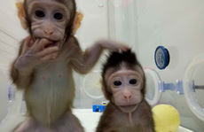 Nhân bản vô tính: Sau khỉ là con người?