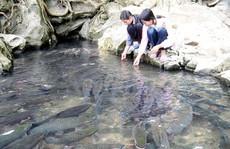 Những giai thoại bí ẩn về suối cá thần Cẩm Lương