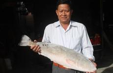 Khánh Hòa: Cặp cá sủ vàng, giá 1,5 tỷ đồng chưa bán