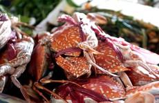 'Thiên đường' hải sản tươi rói ở chợ ngoại ô Sài Gòn