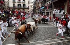 Vì sao bò tót Tây Ban Nha nổi điên khi thấy khăn nhử đỏ