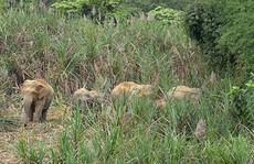Tận diệt chim, thú hoang dã: Cạn kiệt thú ở khu bảo tồn