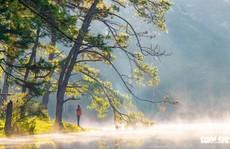 Đà Lạt mơ màng trong 'mùa nắng lạnh' đẹp nhất năm
