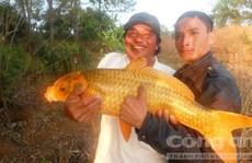 Cá khủng, hiếm và 'vật thể lạ' ở Biển Hồ