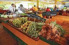 Nông nghiệp organic 'cứu' Cuba