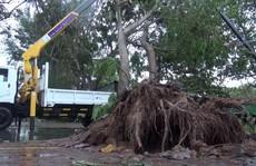 Ảnh hưởng bão số 9, Cần Giờ mưa lớn, cây xanh bật gốc, nhà tốc mái