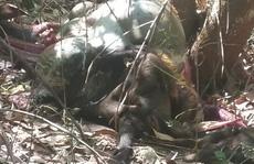 Phát hiện một con bò tót chết trong khu bảo tồn tại Đồng Nai