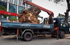 TP HCM giá khởi điểm của gần 1.100 m3 gỗ công chỉ hơn 2,3 tỉ đồng
