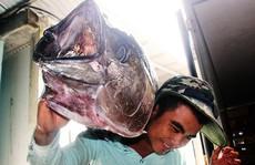 Câu cá 'khủng' lấy tiền xây 'biệt phủ'