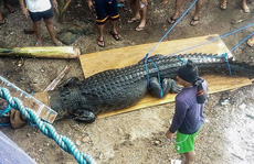 Bắt cá sấu nặng nửa tấn nghi ăn thịt người