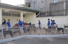 Trung tâm huấn luyện chó đua SES nhận kỷ lục Guinness Việt Nam