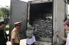 Bắt xe tải vận chuyển 3,5 tấn cá thối