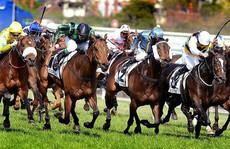 Thủ tướng đồng ý cho Hà Nội làm trường đua ngựa