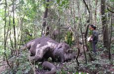 Nhiều loài thú rừng Tây Nguyên đã tuyệt chủng