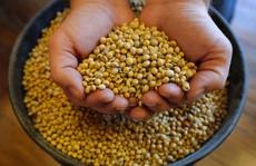 Mỹ mạnh tay với thực phẩm organic 'dỏm'