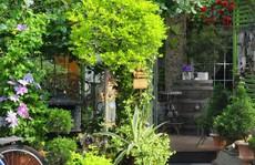 Tuổi 40, sống an yên trong căn nhà vườn xinh xắn