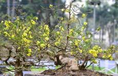 Hội Hoa Xuân TP HCM 2018: Ngất ngây trước kỳ hoa dị thảo