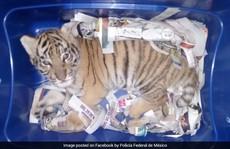 Gửi chuyển phát nhanh... cả con hổ còn sống
