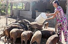 """Về tận làng quê """"khuân"""" lợn rừng, gà chân voi... ăn Tết"""