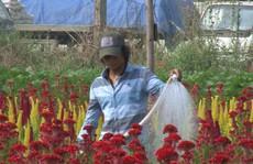 Làng hoa ven Sài Gòn vào vụ Tết