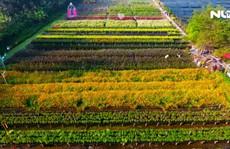 """Ngất ngây với """"vườn hoa Đà Lạt"""" ven sông Sài Gòn"""